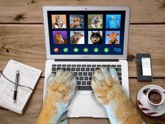 Salud mental: cómo afectan las videollamadas y reuniones laborales al cerebro humano - e087.com